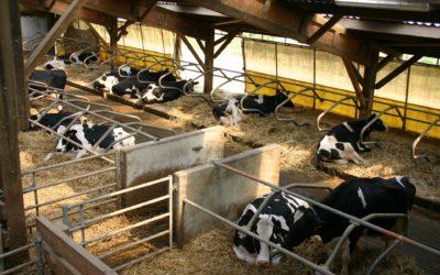AGAPROL recomienda a los ganaderos revisar todas las cláusulas de los contratos antes de firmar, especialmente en lo referente a los costes de producción
