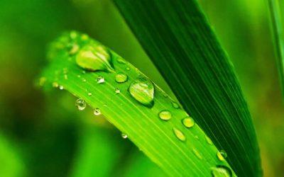 O verde o nada